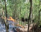 Hơn 6 giờ chiến đấu với giặc lửa trên núi Hang