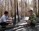 4 héc ta keo và 3.000 cây cao su của nông dân bị đốt, chặt ngang thân