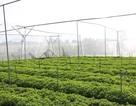 Tập đoàn Minh Hưng đồng hành cùng nhà nông phát triển sản xuất rau an toàn