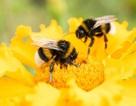 Hầu hết trẻ em nước Anh không biết đến con ong, loài bướm hay quả việt quất