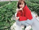 Tốt nghiệp đại học không xin được việc, cô gái Nghệ An đi Nhật nhặt lá tía tô