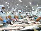 Thủy sản Việt Nam có lợi thế như thế nào tại EU khi EVFTA có hiệu lực?