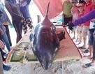 Giải cứu cá voi 150kg trôi dạt vào bờ biển