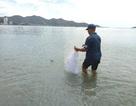 Săn lộc rơi của biển