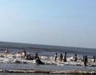 Thanh Hóa cấm biển, Nghệ An sẵn sàng phương án di dời 26 nghìn dân