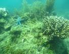 Hỗ trợ 100.000 USD nghiên cứu phục hồi, tái tạo san hô tại vịnh Nha Trang