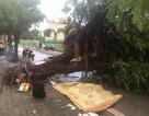 Hà Nội: Nam thanh niên bị cây đổ đè tử vong trên phố giữa trận giông lốc
