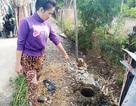Bi hài vụ chặt cây trên đất đã mua, suýt ngồi tù: Lại phục hồi điều tra!
