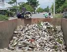 Cá chết nổi trắng hồ điều tiết ở Đà Nẵng