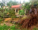 Cây xanh đổ la liệt tại Thừa Thiên Huế
