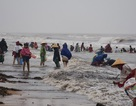 Biển động đánh vẹm dạt vào bờ, cả làng đổ xô đi vớt