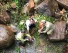 Phát hiện cá thể rùa núi viền bò vào nhà, người dân bắt giao nộp cho cơ quan chức năng