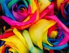 Một bệnh nhân đột quỵ vừa thay đổi cách hiểu về nhận thức màu sắc của con người