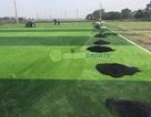 GreenSports địa chỉ bán và cung cấp cỏ nhân tạo giá rẻ.