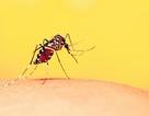 Chung tay bảo vệ sức khỏe cộng đồng khỏi dịch sốt xuất huyết