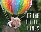 """Thú vị bộ sách ảnh """"thông thái"""" xoay quanh... những chú lợn"""