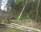 """Gần 1.200ha diện tích rừng """"bị mất"""", kiến nghị chuyển cơ quan điều tra"""