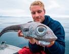 Bắt được cá hiếm có đôi mắt khổng lồ lồi to như bóng đèn