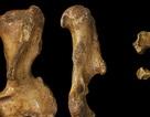 Australia cổ đại là nhà của các loài động vật có túi khổng lồ