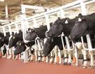 """Công nghệ 4.0 đã hiện diện hàng chục năm trước ở """"Thủ phủ bò sữa"""" của Việt Nam"""