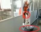Nhà ăn trường học Trung Quốc dùng bột giặt để rửa bát đĩa