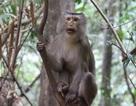 Phát hiện 8 loài thú linh trưởng thuộc 1 bộ, 3 họ tại Vườn Quốc gia Vũ Quang