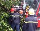 Giải cứu hàng chục người mắc kẹt trong xe khách gặp tai nạn