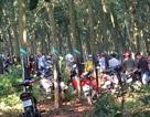 Phát hiện thi thể thiếu nữ nghi bị sát hại trong vườn cao su
