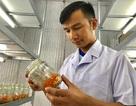 """Thanh Hoá: Bỏ lương 14 triệu/tháng về quê trồng """"siêu nấm"""" kiếm 500 triệu đồng/năm"""