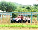 Thầy cô vùng cao trồng rau, nuôi lợn để cải thiện bữa ăn cho học sinh