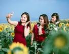 Nghệ An: Hàng vạn du khách đổ về cánh đồng hoa dịp Tết dương lịch