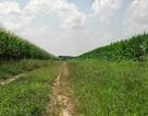 Song song nhiều phương thức canh tác nông nghiệp: Giải pháp cho vấn đề an ninh lương thực!