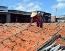 Cà Mau: Làng khô biển vào vụ Tết, nhân công kiếm bạc triệu
