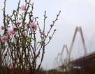 Cảnh sắc ngày xuân ở đất đào nổi tiếng nhất Hà Nội