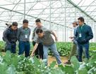 Hợp tác với Vineco, hơn 800 hộ nông dân tham gia chuỗi sản xuất nông sản sạch
