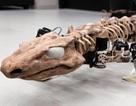 """""""Tái sinh"""" loài thằn lằn có niên đại 300 triệu năm đã tuyệt chủng"""
