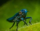 Mỹ đang phát triển công nghệ AI mới nhờ… côn trùng