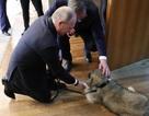 Món quà đặc biệt tổng thống Serbia tặng ông Putin