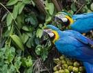 """Vì sao nói: """"Rừng nhiệt đới là người bảo vệ tuyệt vời nhất của Trái Đất""""?"""