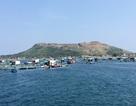Nông dân Lý Sơn lãi lớn từ mô hình nuôi cá bớp thương phẩm