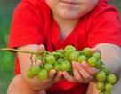 Bé 3 tuổi qua đời vì truyền thống nuốt nho mừng năm mới ở Tây Ban Nha