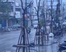 Vụ cây xanh mọc dưới lòng đường: Lãnh đạo thành phố lên tiếng