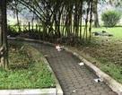 Hà Nội: Phát hiện thi thể nữ giới trong vườn hoa, nghi bị cưỡng bức