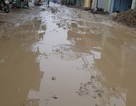 Nghìn hộ dân khốn khổ vì bùn lầy tấn công