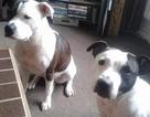 Thảm khốc bé sơ sinh qua đời vì bị chó nhà tấn công