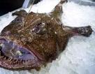 Con cá xấu như quỷ, răng sắc nhọn ghê người mà giá hơn 1 triệu đồng/kg