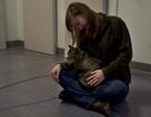 Không chỉ chó, mèo cũng có tình cảm với chủ nhân