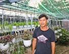 Đà Nẵng: Trồng hoa chậu mini công nghệ cao, kiếm bộn tiền