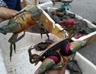 Sốc: Giá cua biển bán sang Trung Quốc rẻ bất thường