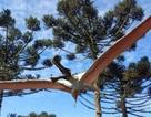 Phát hiện hoá thạch của các loài bò sát biết bay mới ở Úc